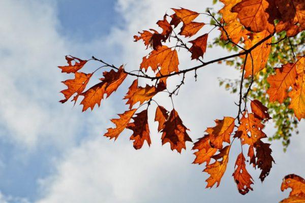 autumn 894426_1280